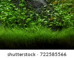 Freshwater Aquarium Green Plants