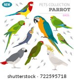 parrot breeds icon set flat... | Shutterstock .eps vector #722595718