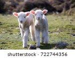 lambs  wainuiomata coast  new...