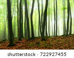 foggy forest | Shutterstock . vector #722927455