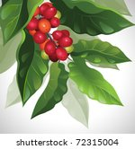 branch of ripe coffee   Shutterstock .eps vector #72315004