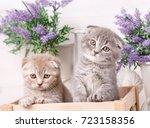 portrait of two scottish...   Shutterstock . vector #723158356