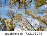 view to the crows of trees at a ... | Shutterstock . vector #723179278