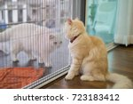 two fluffy cats are looking at... | Shutterstock . vector #723183412
