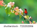 the colorful bird and beautiful ... | Shutterstock . vector #723202006