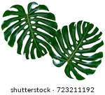 green leaf of a tropical flower ... | Shutterstock . vector #723211192