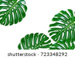 green leaf of a tropical flower ... | Shutterstock . vector #723348292