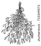 mistletoe illustration  drawing ...   Shutterstock .eps vector #723349072