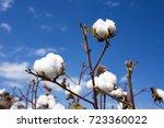 cotton field | Shutterstock . vector #723360022