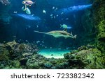 Small photo of Large sawfish, also known as carpenter shark, and other fishes swimming in a large aquarium