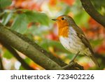 amazing robin bird with natural ... | Shutterstock . vector #723402226