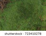 Juicy Green Pincushion Moss...