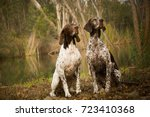 two german shorthaired pointer... | Shutterstock . vector #723410368