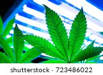 pot plant  cannabis  weed or... | Shutterstock . vector #723486022