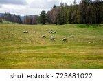 Sheeps Graze In A Field Outsid...