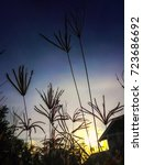 flower grass  silhouette.flower ...   Shutterstock . vector #723686692