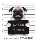 criminal mugshot  of pug  dog... | Shutterstock . vector #723693706