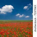 Field Of Poppies With Beauty...