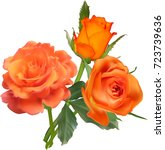 Illustration With Orange Roses...