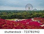 landscape of beautiful flower...   Shutterstock . vector #723781942