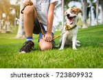 Stock photo jack russell dog with owner and leather leash ready to go for a walk 723809932
