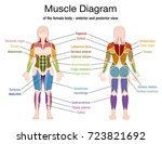 muscle diagram of the female... | Shutterstock .eps vector #723821692