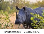 white rhino in south africa | Shutterstock . vector #723824572