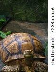 the african spurred tortoise... | Shutterstock . vector #723855556