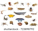 Set of animals isolated on...