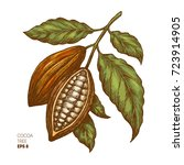 cocoa beans illustration.... | Shutterstock .eps vector #723914905