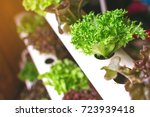 young and fresh vegetable green ... | Shutterstock . vector #723939418