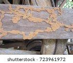 termite on wood | Shutterstock . vector #723961972