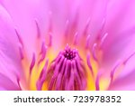 close up beautiful pink lily... | Shutterstock . vector #723978352