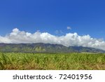 Sugar field in Maui with green plants and mountains (West Maui mountain) with clouds and blue sky. Central Maui. Hawaii. End of February. - stock photo