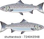 atlantic salmon vector art | Shutterstock .eps vector #724043548