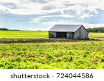 Small photo of Red painted old vintage shed, barn with rows of cultivation furrow land plants in soil during summer landscape field in countryside