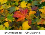 colorful autumn maple leaves....   Shutterstock . vector #724088446