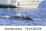 humpback whale watching in los... | Shutterstock . vector #724120228