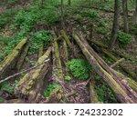 The Mossy Wooden Bridge Of...