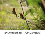 two kingfishers are sunbathing... | Shutterstock . vector #724239808