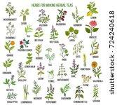 best herbs for teas. hand drawn ... | Shutterstock .eps vector #724240618