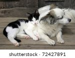 Stock photo cat dog friendship 72427891