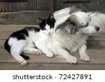 Stock photo cat dog friendship 72427891