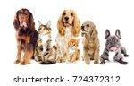 dog and kitten on a white... | Shutterstock . vector #724372312