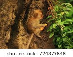 Baby Macaques Have Settled On...