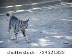 walking striped cat | Shutterstock . vector #724521322