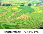 green and yellow rice terrace... | Shutterstock . vector #724542196