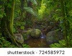 asian jungle   Shutterstock . vector #724585972