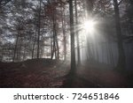 Morning sun rays through a dark forest - Fall image with a shadowed forest, in autumn colors, enlightened by a few sun rays that pierced the morning mist, in Fussen, Germany.