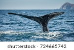 tail of the humpback whale.... | Shutterstock . vector #724665742